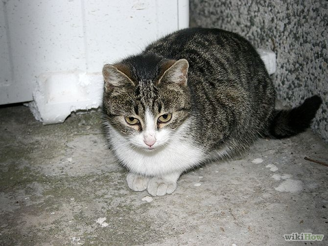 670px-Take-Care-of-a-Stray-Cat-Step-6